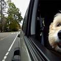 Kutyák az autó ablakában