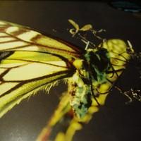 Az enyészet melankóliája - Amon Tobin: ISAM