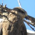 A csíkos méhkaptár hegyek vidéke - Purnululu (Nagy Ausztrál Körút, 11. hét, 06.09-06.15)