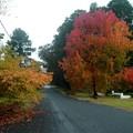 Itt van az ősz, itt van újra... Legalábbis Ausztráliában! :)