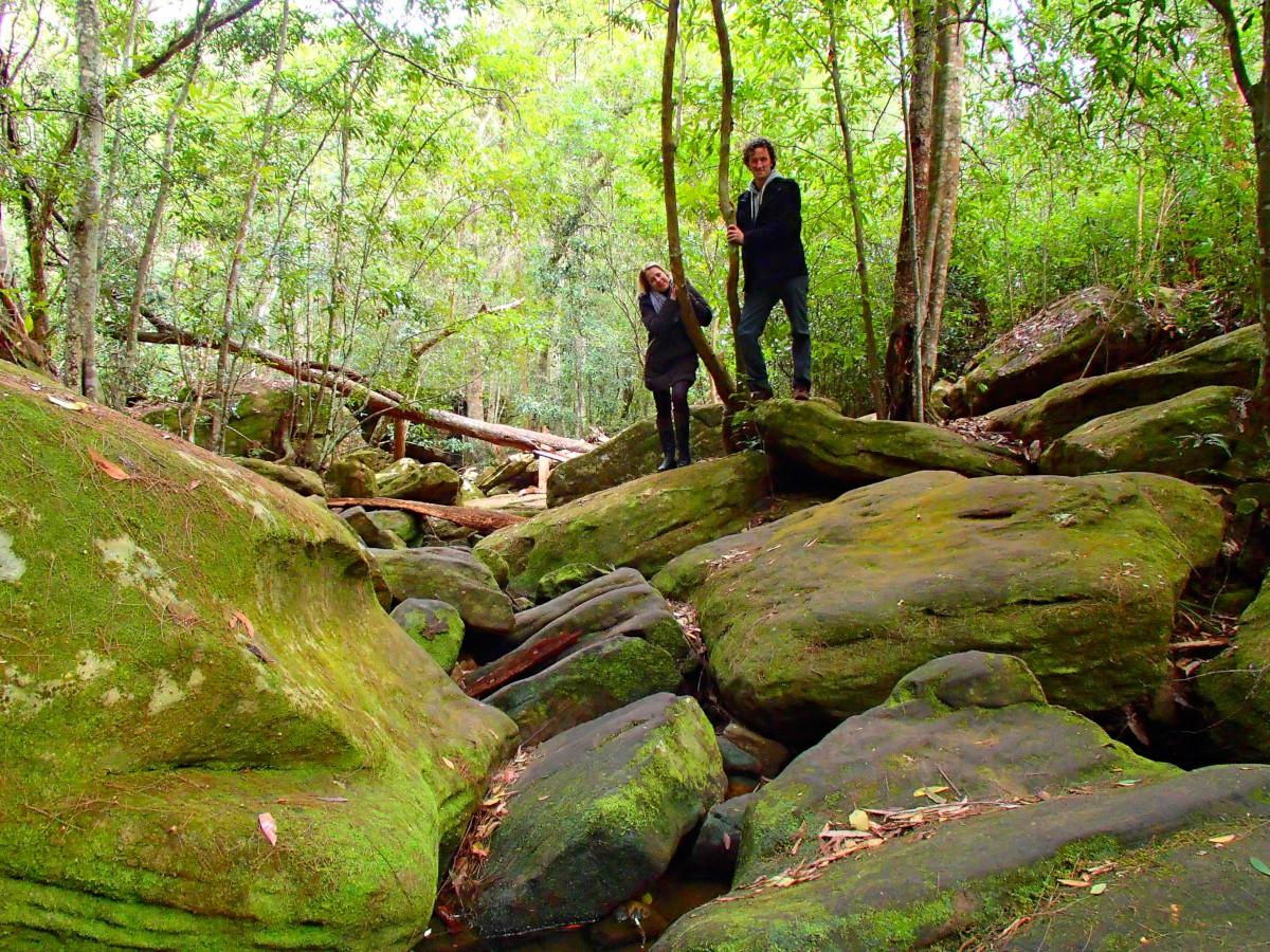 Fantasztikus esőerdők
