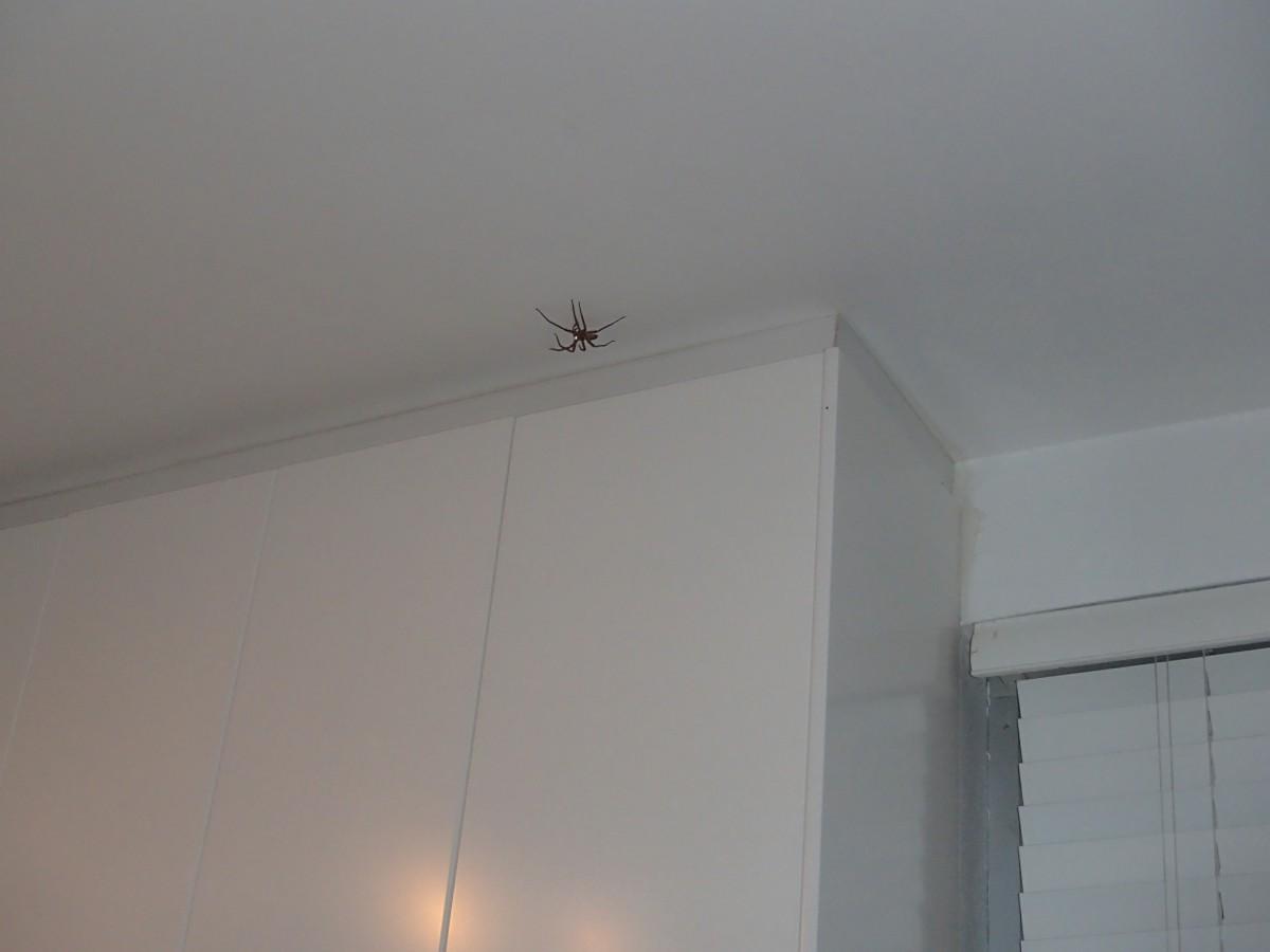 Pókok nem csak a házon kívül vannak