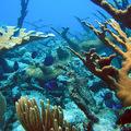Nyakék a korallzátonyok színeiből egy szülinaposnak