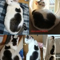 Macska koncepció