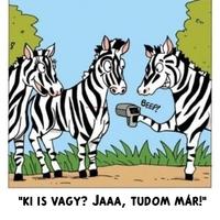Zebra sors