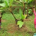 Chiang Mai 4. - Sirikit Botanikus Kert, Mae Sa vízesés