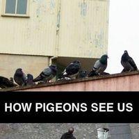Ahogy a galambok látnak bennünket