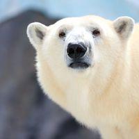 """Gyomorforgató: Semjént """"inspirálná"""", ha lelőhetne egy kihalás szélén álló jegesmedvét"""