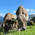 Itt a jó idő, legelnek a tehenek ...őőő... a gyerekek