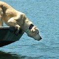 Siófok vs. állatok: csak egy maradhat