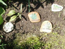 Fűszer-jelölő-kövek kertben