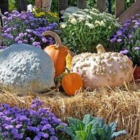 Jövő héten újra Őszi Kertészeti Napok!