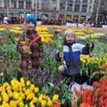 Amszterdamban 200.000 tulipánnal indították a tavaszi szezont