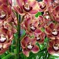 Ismered az orchideákat? - kvíz