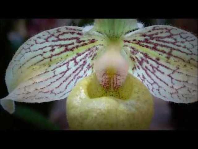 Videó beszámoló a tavaszi orchidea kiállításról