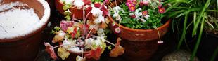 Így néznek ki a kertek a havazás után