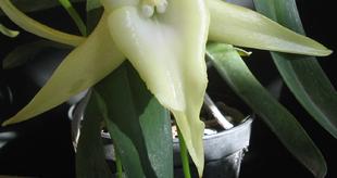 Nyerj páros belépőt a tavaszi orchidea kiállításra!