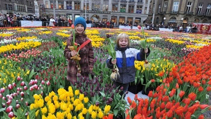 tulipday.jpg