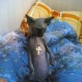Cigány macskája