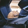 Robogózó macska