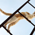 Béla macskája