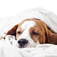 Őszi adománygyűjtés menhelyi kutyáknak