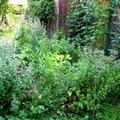 Fűszeres dzsumbuj a kertben