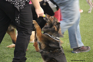 Kutyának lenni jó, pláne Bécsben