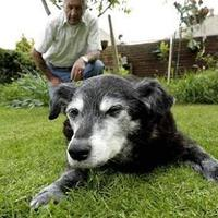 29 évesen meghalt a világ legöregebb kutyája