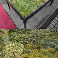 Különleges beltéri növénydekorációk