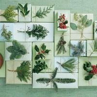 Saját készítésű ajándékok növénykedvelőknek