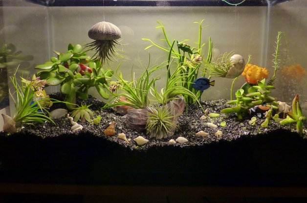 aquarium-mini-garden.jpg