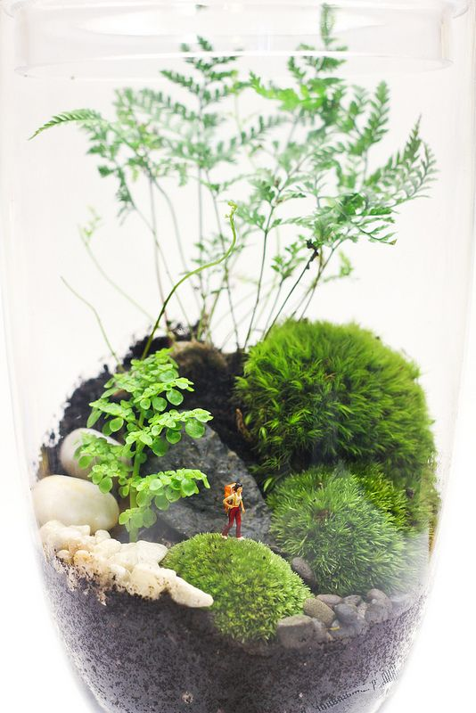 aquarium-mini-garden_1.jpg