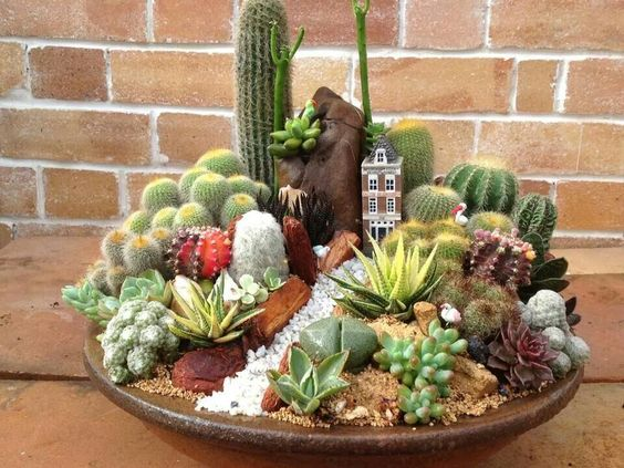 kaktusz_1.jpg