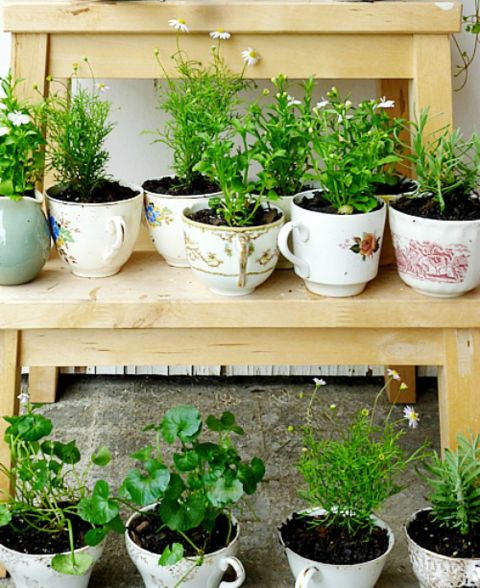 teacup-herb-garden.jpg