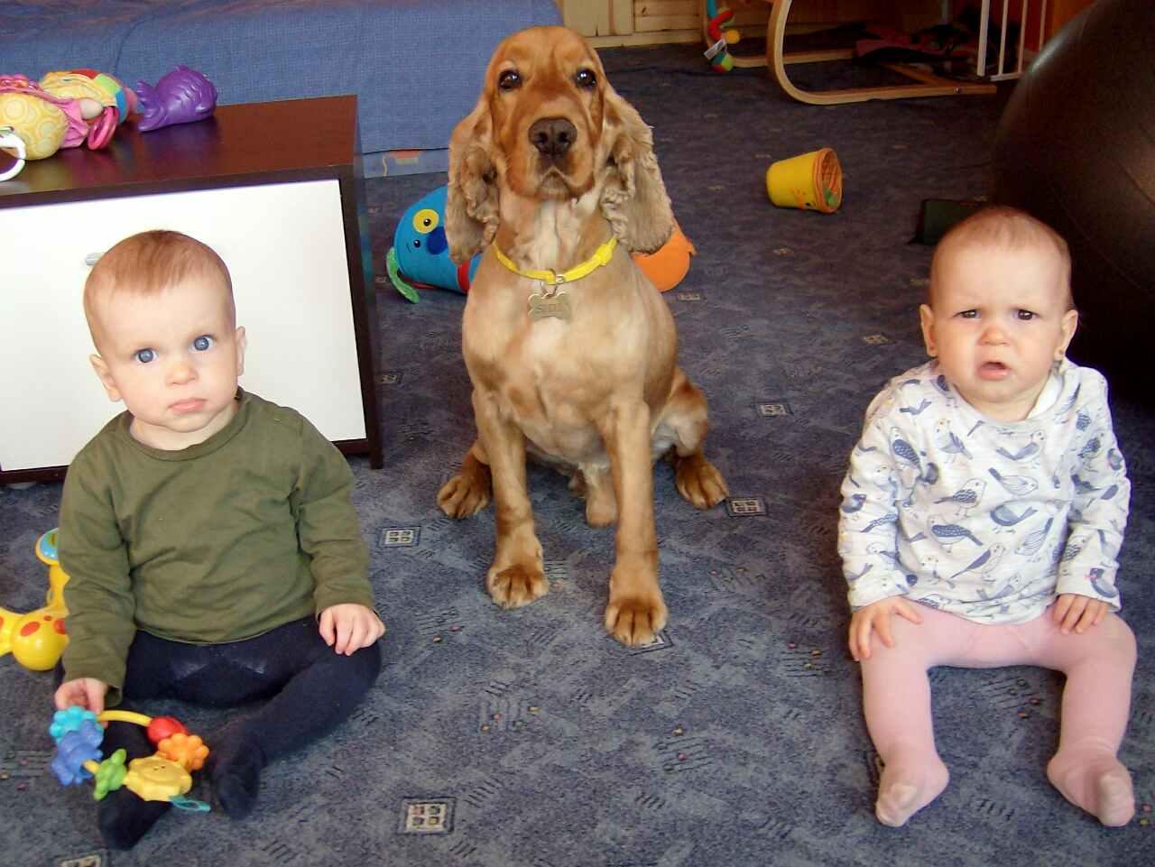 Erről a képről azt kérdezte minden családtag Á-tól, hogy azt mondta: 'mindenki ÜL!'? Szerencsére nyugodt kutyus, elég neki az, hogy a közelükben van. Nem mászik rájuk, és hagyja békésen a nyúzást. A gyerekek meg hamar eltelnek vele.