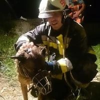 Kutyát mentettek ki egy mányi kútból a bicskei tűzoltók