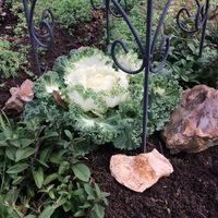 Őszi szöszmötölések a kertben
