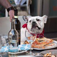 Ezeket az ételeket SOHA ne add a kutyádnak