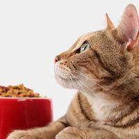Mit eszik a macskám?!