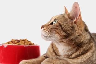 Mi eszik a macskám?!