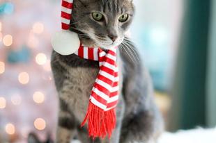 Ezek a legjobb macska outfitek karácsonyra!