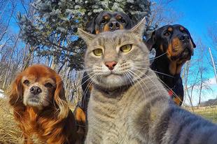 Ilyen, amikor az állatok lőnek egy Selfie-t