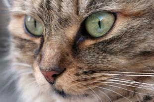 5 dolog, amit nem tudtál a macskák etetéséről