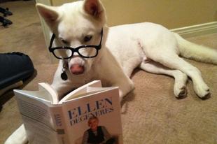 Cukisághalmaz a köbön: Takarító és olvasó kutyák