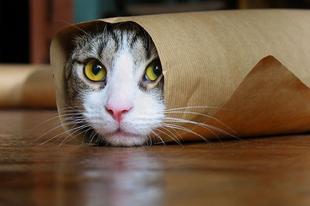 Megdöbbentő tények  a macskák viselkedéséről