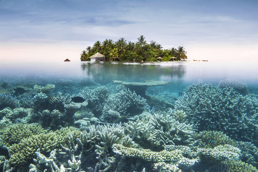 maldiv_getty.jpg