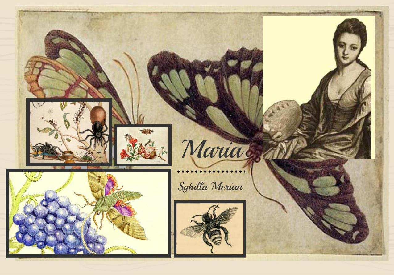 Egy gyümölcsöző expedíció és a rovarok szexuális forradalma