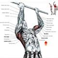 Saját testsúlyos gyakorlatok bicepszre