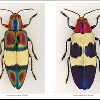 Hangay György: a bogarak bolygója